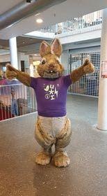 Petter kanin på Aurora kino Fokus